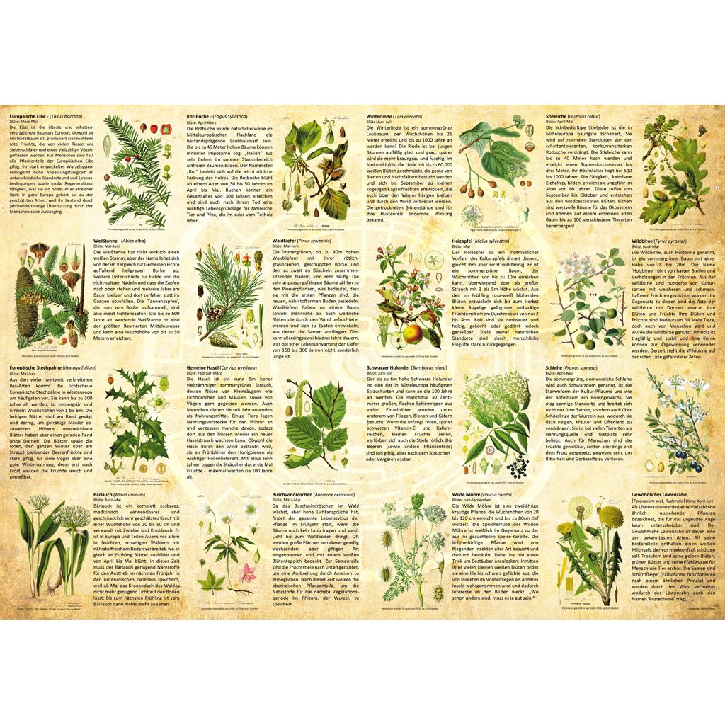 Poster-Pflanzen-01