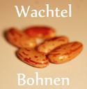 Die Wachtelbohne, auch Borlotti-Bohne genannt, gehört wie fast alle Bohnen-Sorten zu der Gartenbohne (Phaseolus vulgaris).